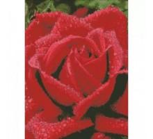 Алмазная мозаика Душистая роза