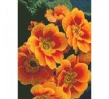 Алмазная мозаика Примула оранжевая