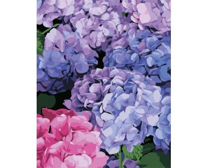 Картина по номерам Цветущая гортензия