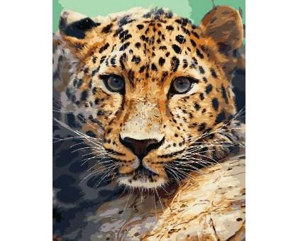 Картина по номерам Взгляд леопарда