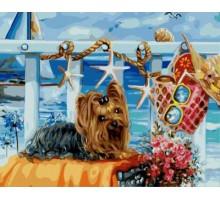 Картина по номерам Йоркширский терьер на пляже