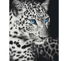 Картина по номерам Голубоглазый барс