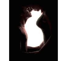 Картина по номерам Домашние любимцы Кошка