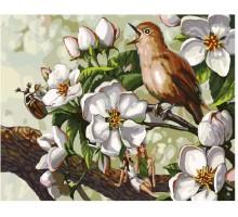 Картина по номерам Пение птицы в цветах