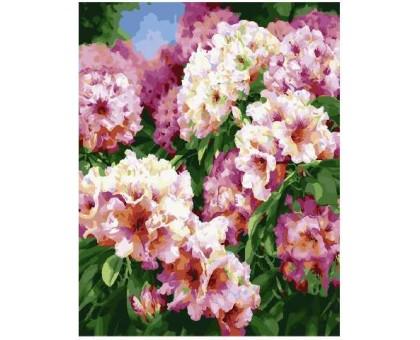 Картина по номерам Садовые цветы