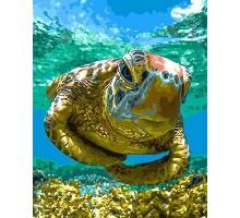 Раскраска по номерам Черепаха