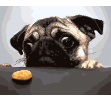 Картина по номерам Мопс и печенька