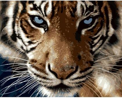 Раскраска по номерам Взгляд тигра