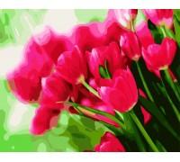 Картина по номерам Весенние тюльпаны (Без коробки)