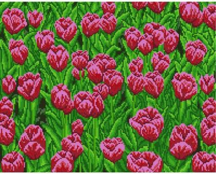 Картина по номерам Поле розовых тюльпанов