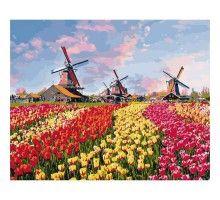 Картина по номерам Красочные тюльпаны Голлландии