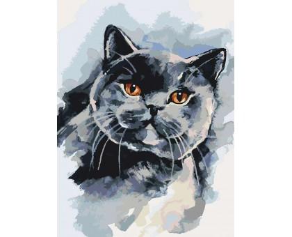 Картина по номерам Британский котейка