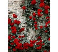 Картина по номерам Вьющаяся роза