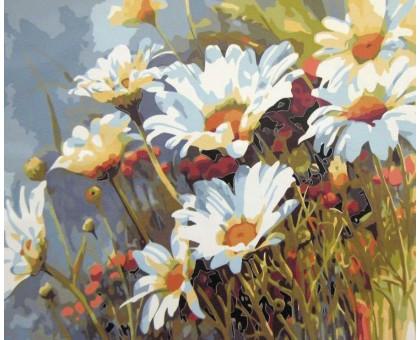 Картина по номерам Ромашковое поле