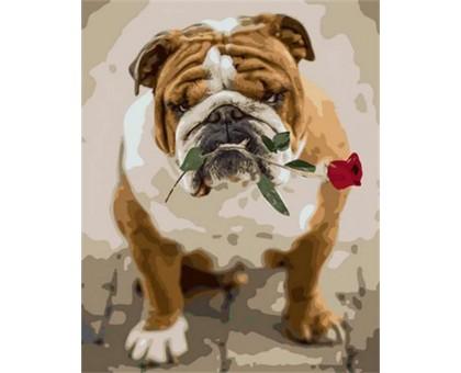 Картина по номерам Английский бульдог с розой