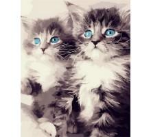Картина по номерам Голубоглазые котята