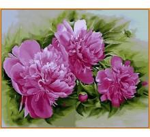 Картина по номерам Розовые пионы (в раме)
