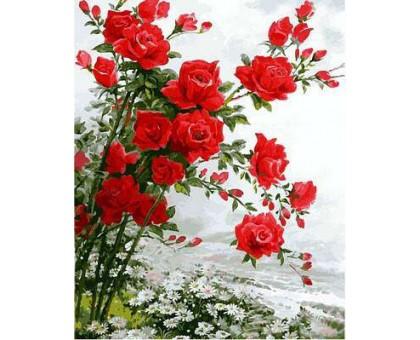 Раскраска по номерам Розы на ромашковом поле
