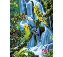 Картина по номерам Волнистые попугайчики