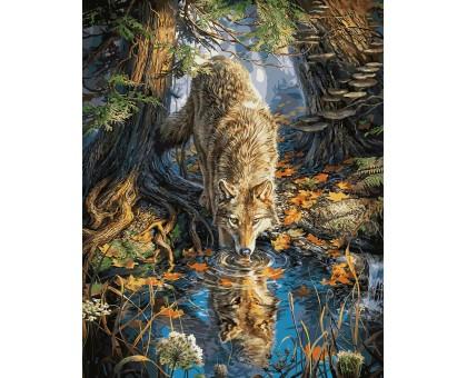 Картина по номерам Волк на водопое