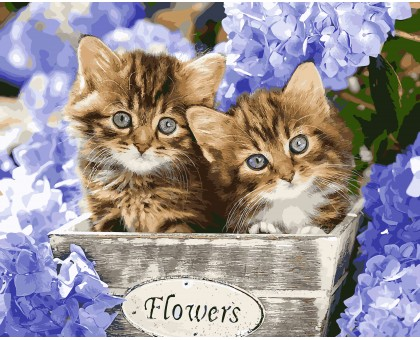 Раскраска по номерам Голубоглазые котята