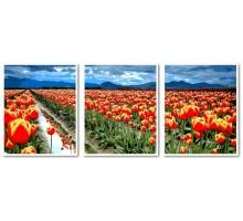 Картина по номерам Триптих Поле тюльпанов